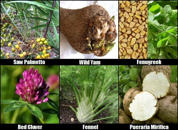 herbal breast enhancement ingredients